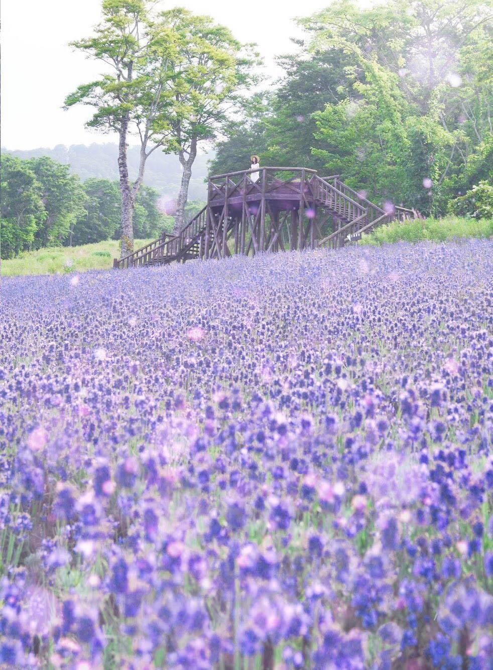 5万株のラベンダーが香る初夏の高原♪ 《期間限定》40種類のイタリアンバイキング 3時のおやつ💖青い実パクパク♪ブルーベリー狩り【女性限定バスツアー】