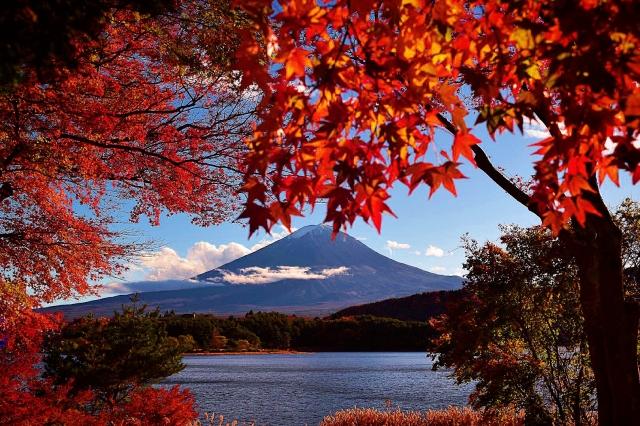 【催行決定💖】紅葉が最高の時に♪河口湖もみじ祭り💖秋の富士を眺めながら湖畔のホテルで優雅に本格フレンチコースを堪能✨【女性限定バスツアー】