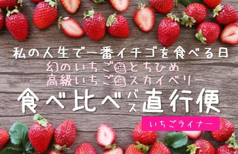 😻私の人生で一番イチゴを食べる日😻 幻のいちご🍓とちひめ & 高級いちご🍓スカイベリー 😋食べ比べ😋バス直行便🚌いちごライナー 【女性限定バスツアー】